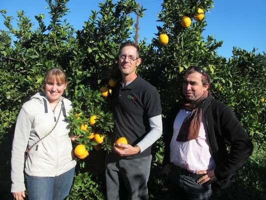 oranges Biogalta