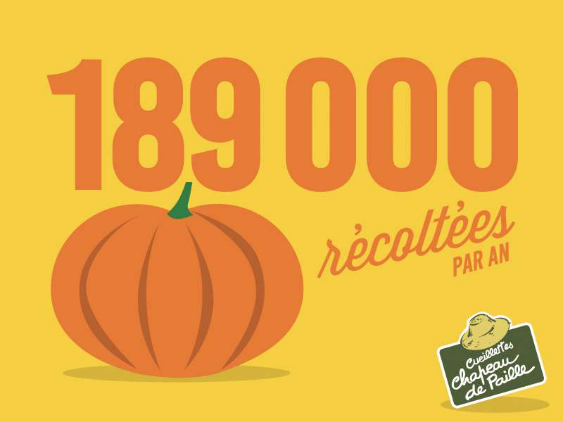 189 000 Citrouilles récoltées par an