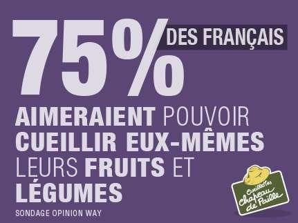 75% des français aimeraient pouvoir cueillir eux-mêmes leurs fruits et légumes